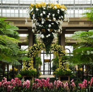 The Orchid Chandelier at Longwood Gardens