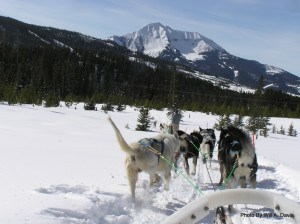 The sleddogs love to run.