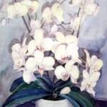 hvide orkideer