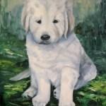 hvid hund