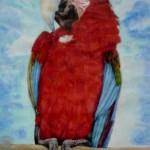 rød papegøje