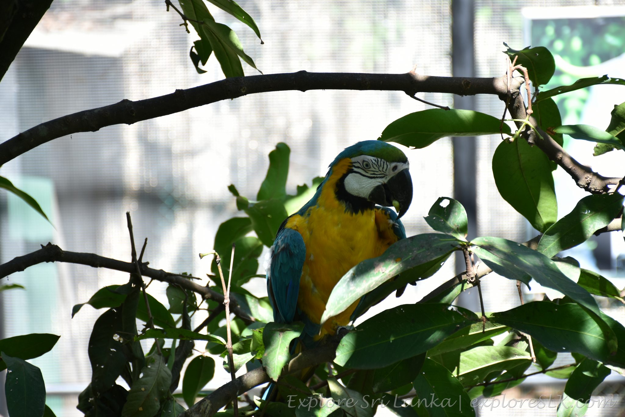 A macaw on tree