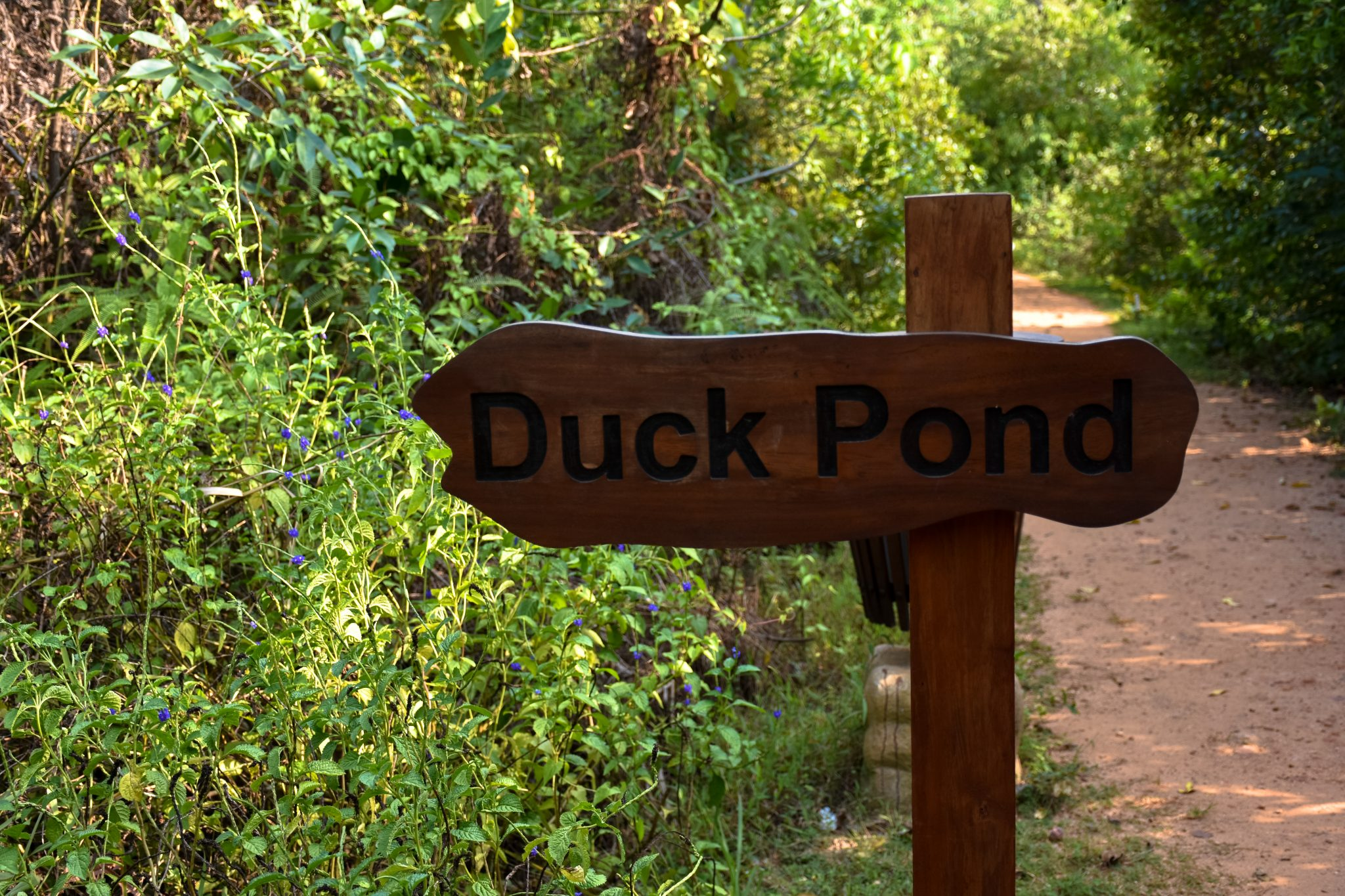 Duck Pond in Beddagana Wetland Park