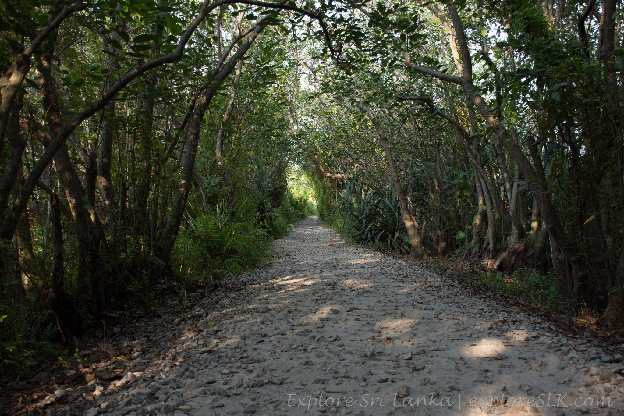 Shady footpaths in Beddagana wetland park