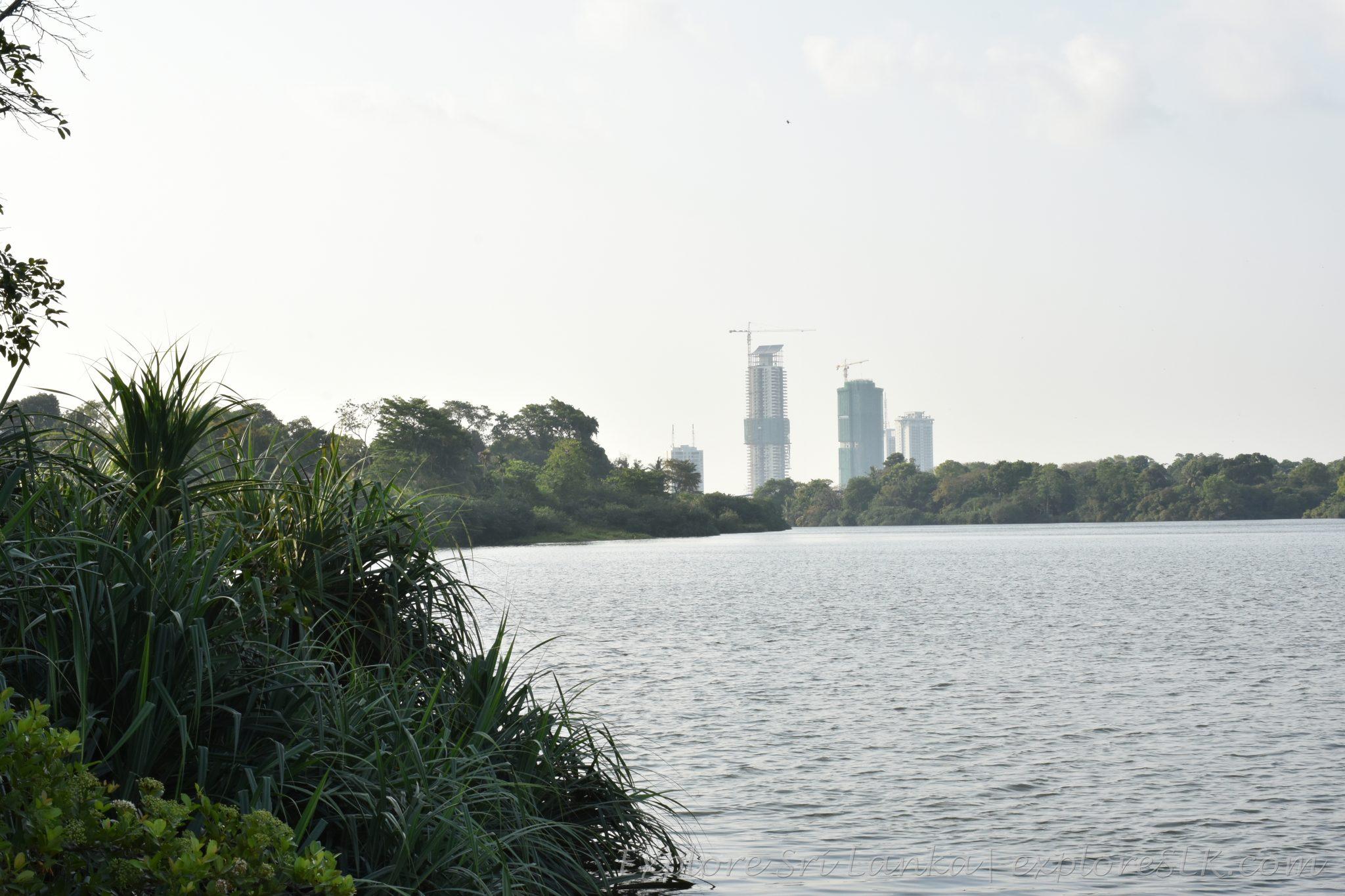 View of Diyawanna Lake from Floating Deck