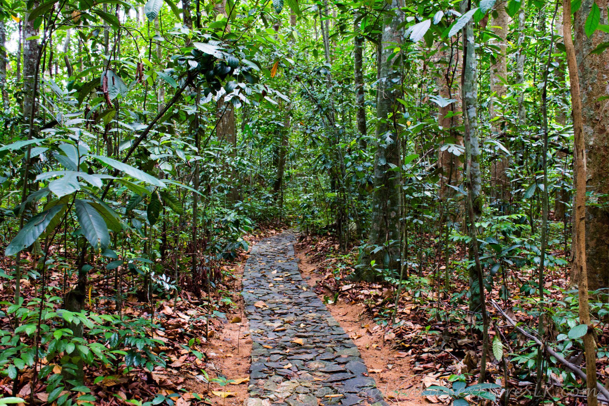 Footpath in Jungle