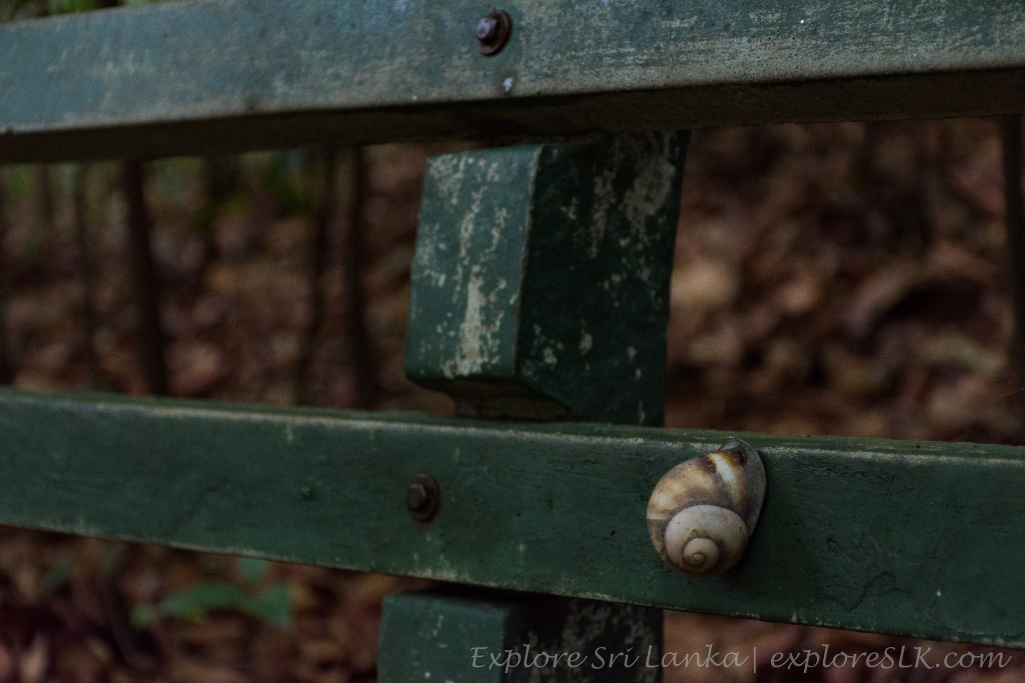 snail on a bench