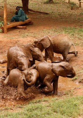 Elefantenwaisen Sambia