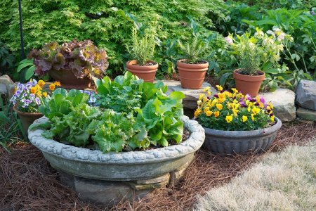 Vegetables in Planters