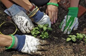Close up of people planting in a garden