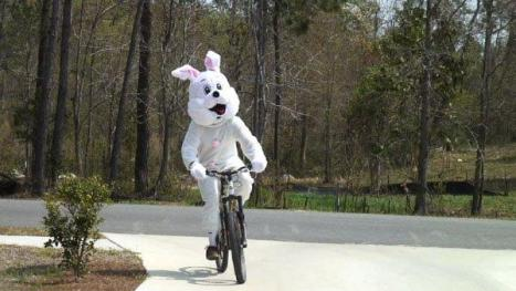 Easter bunny on a bicycle