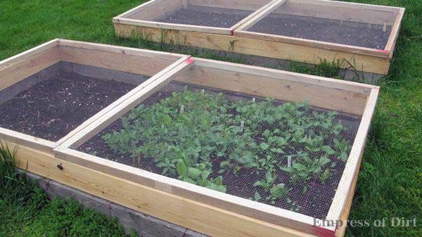 Raised garden bed with Gopher, Squirrel, Bird, and Moth protection!