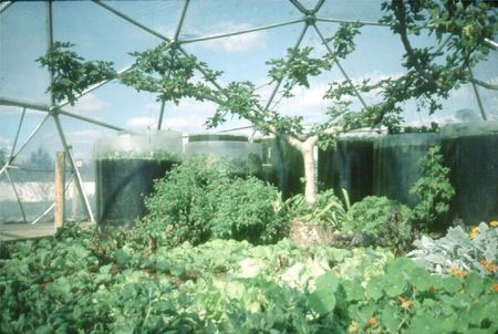 Greenhouse Pillowdome