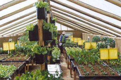 Greenhouse Solar Bolivian.JPG
