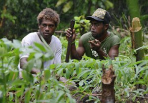 Sasamara Kera (left) and Bora Alen discuss organic cassava and sweet potato varieties in a field trial in the Solomon Islands.