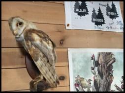 Mariton Wildlife Sanctuary Center