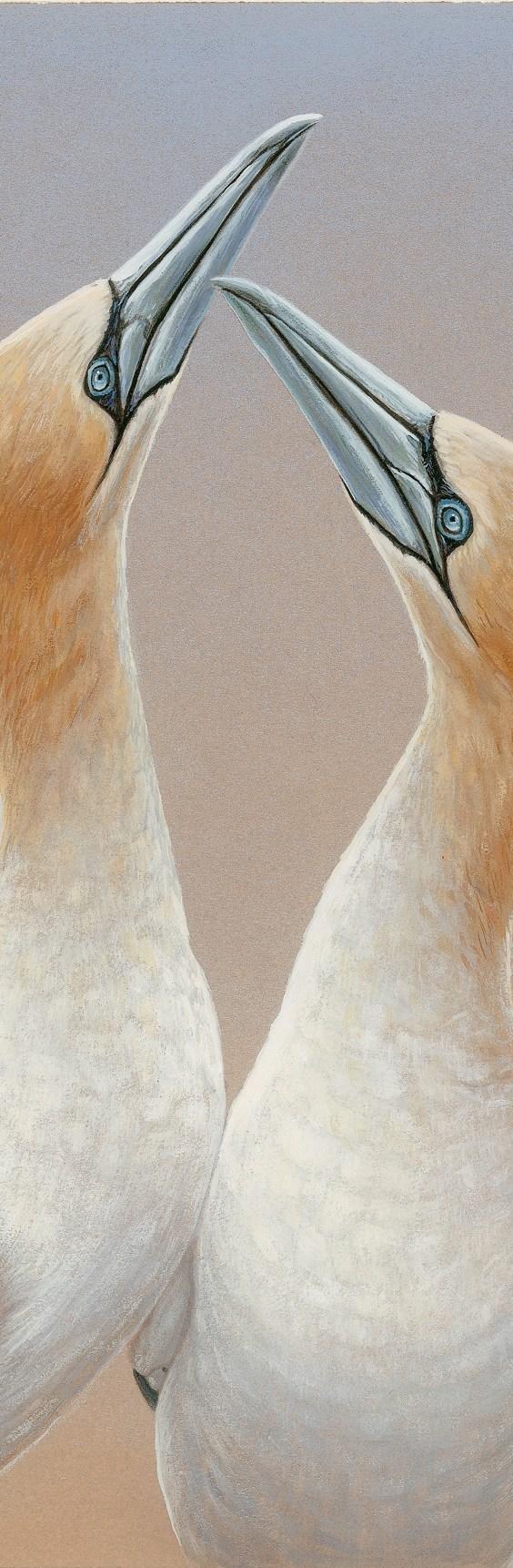 original gannet painting