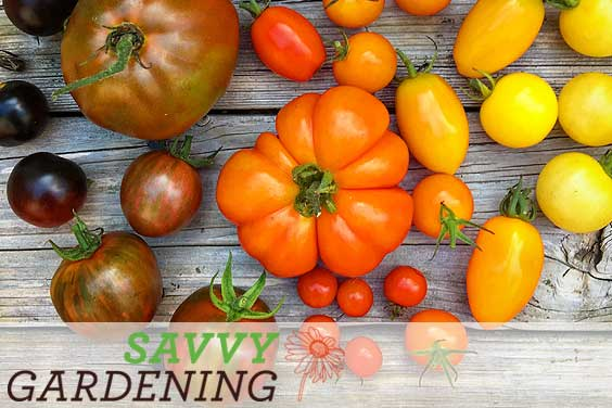 Savvy Gardening news, Winter 2014