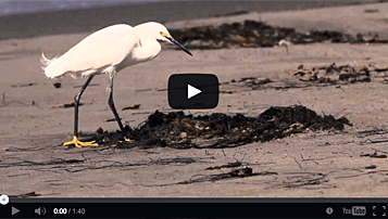 Slow motion video filmed by Cornell students during a field workshop in southern California