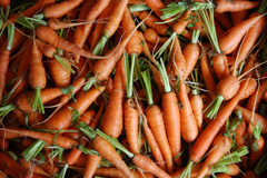 Carrots for the Food Bank