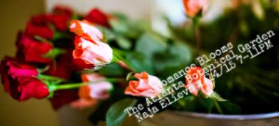 Romance Blooms The Atlanta Botanical Garden 2/14/15