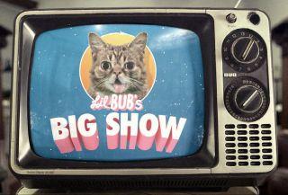 CATSBURY PARK CAT CONVENTION Announces The World's Most