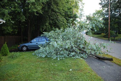 tree vs. car