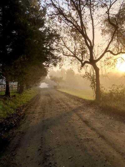 Morning gravelly light