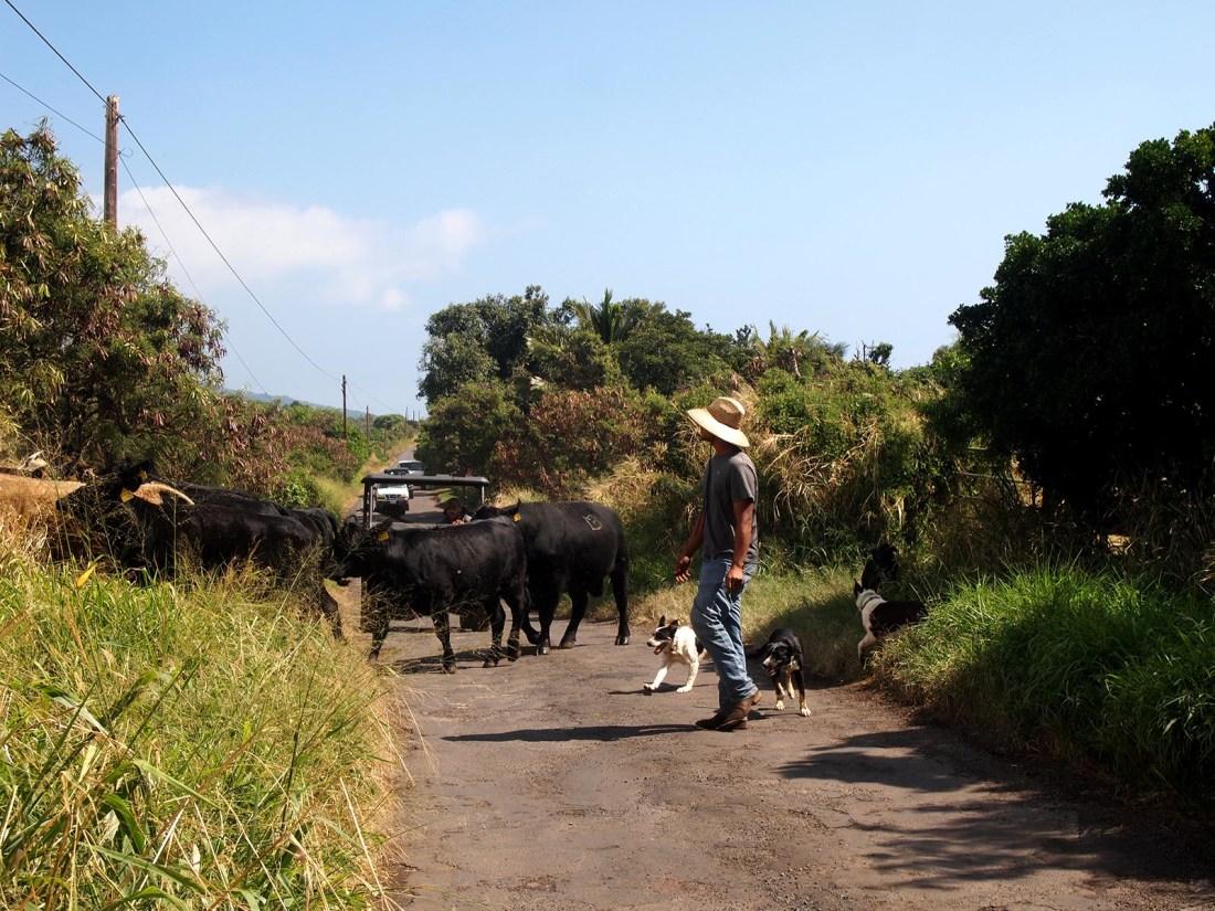 Maui Paniolo cowboys