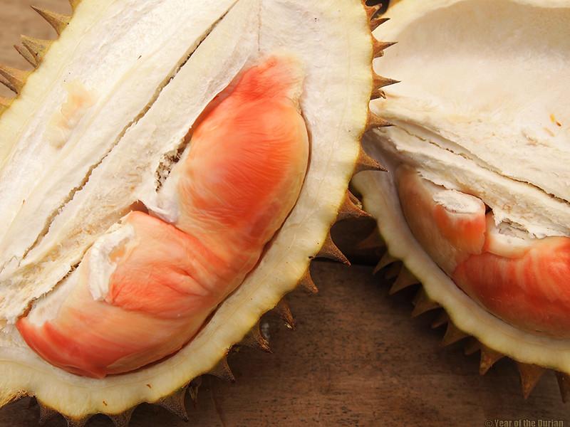 Durian Pelangi in Banyuwangi Java
