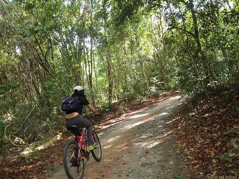 bicycling Pulau Ubin