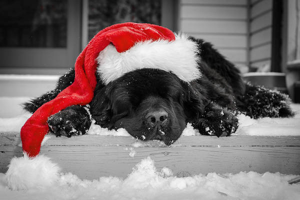 Christmas Black Puppy With Santa Hat Wallpaper Gallery