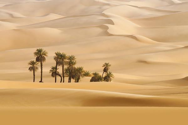 Palms In The Desert Wallpaper Gallery Yopriceville