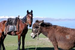 Best friends, horse and donkey