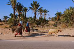 Shepherds in Tunisia