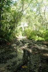 03_mud-track2.jpg