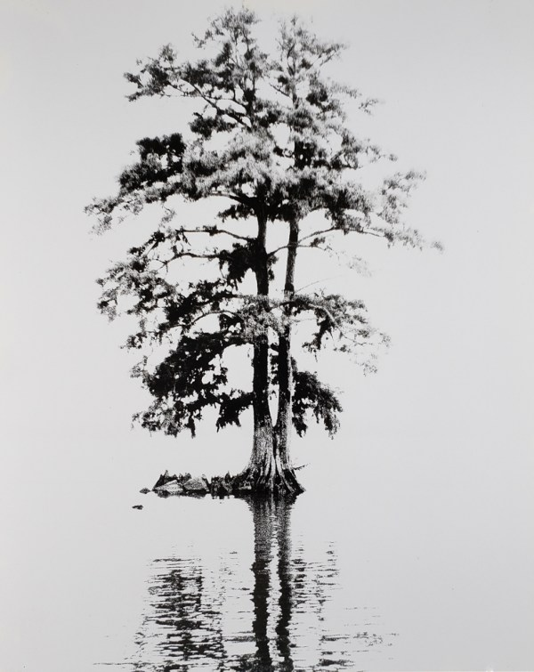 Bald cypress stands on the shore of the Pamlico River near Washington, NC. B&W handcrafted alternative process photograph (original silver emulsion print from paper negative). © WJ Eastman Offered by GALLERY5X7.
