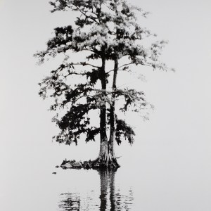 """Bald cypress stands on the shore of the Pamlico River near Washington, NC. B&W handcrafted alternative process photograph (original silver emulsion print from paper negative). """"Bald Cypress Reflections"""" © WJ Eastman. Offered by GALLERY5X7"""