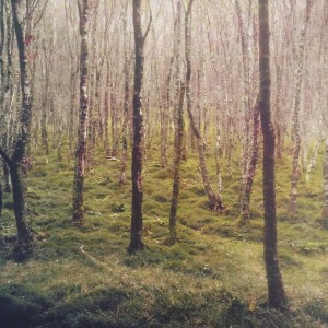 """""""Forest at Glendalough"""" © David Aimone. Approx. 9"""" x 9"""" handcrafted multi-layer print on Hahnemuhle Platinum Rag (gum bichromate over cyanotype over platinum/palladium). Signed single edition print offered by GALLERY5X7 at $650."""