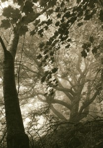 """""""After the Bend. Mist"""" © Iván B. Pallí. """"A misty morning in Corstorphine Hill, Edinburgh, Scotland."""" Approx. 17x24cm hand-printed silver gelatin lith print on Kodak Bromesko paper. Signed and numbered original print, edition 2/25, offered at $250."""