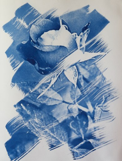"""""""Dark Beauty in Blue"""" © Richard Kynast. Approx 27x35cm / 10.6x13.8"""" on Bergger COT320. Handcrafted alternative process photograph (original traditional formula cyanotype from a digital negative). Print is signed and and one of a kind, offered by GALLERY5X7 at $500."""