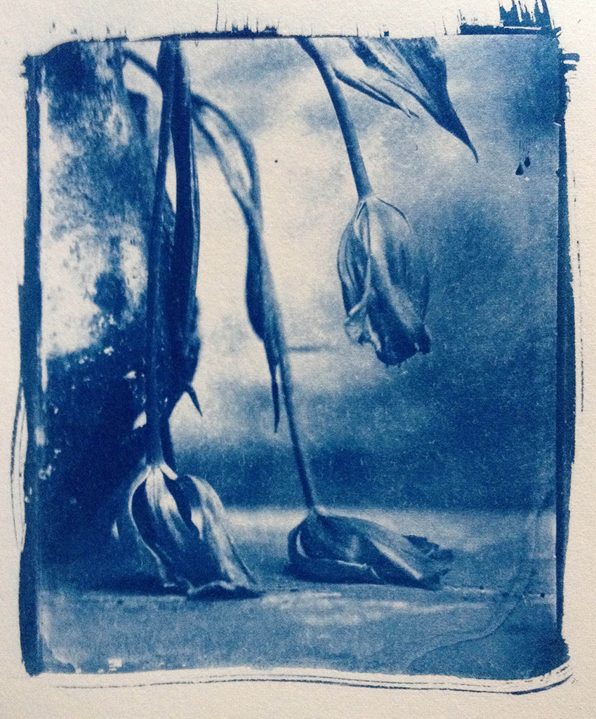 """""""Blue"""" © Sarah Lycksten. Approx. 4x5"""" handcrafted alternative process photograph (cyanotype print from glass wet plate negative on Arches fine art paper). Signed original print offered by GALLERY5X7 at $250."""