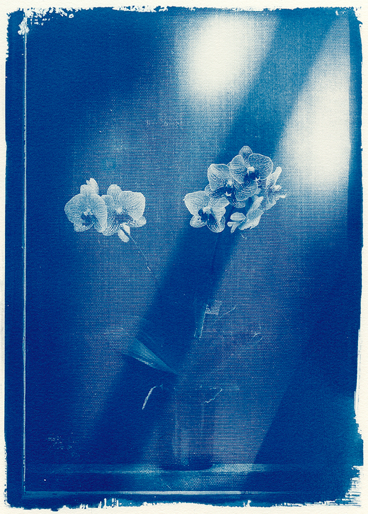 """""""Ester's Orchid"""" © Mat Hughes. Approx. 6.75x9.5"""" (17x24cm) handcrafted cyanotype still-life study behind screen from scanned large format 4x5 negative. Printed on watercolour paper and bonded on 16x16"""" (40.5x40.5cm) Forex foamboard ready for framing. Edition of 5 unique signed prints. Offered by GALLERY5X7 at $250."""
