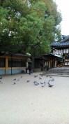あびこ山観音寺 (Abikosan Kannonji) 6 November 2016 (11)