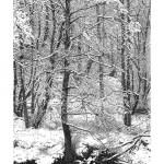 sarahwolfendenWinter snow for web
