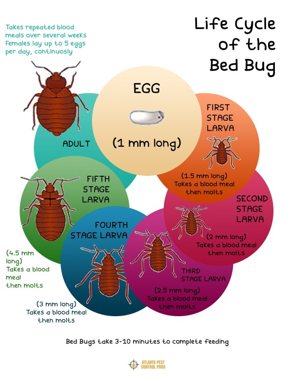 Lifecycle-of-the-Bed-Bug-Atlanta-Pest-Control-Pros