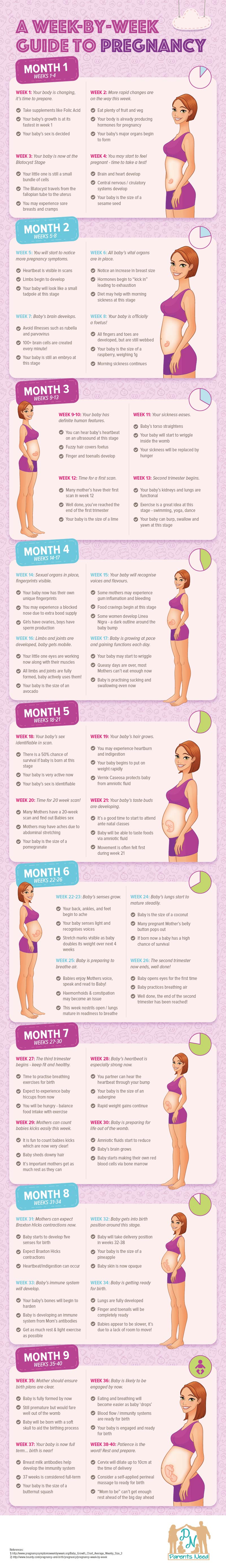 Pregnancy- A Week by Week Journey