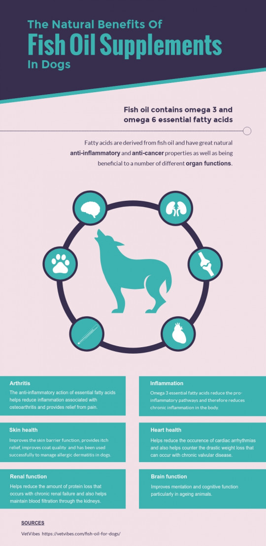 The Natural Benefits of Fish Oil Supplementation In Dogs