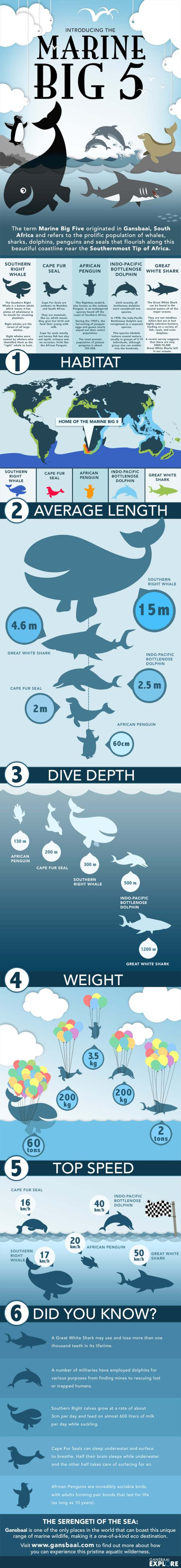 marine-big-5-infographic-galleryr