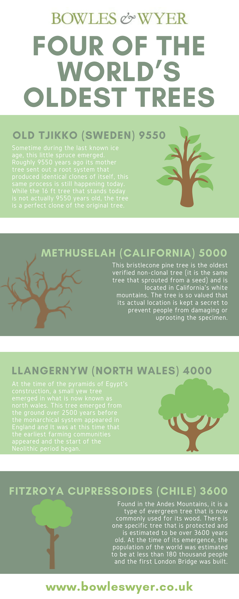 Four of the World's Oldest Trees